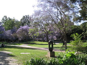 UCLA Sculpture Garden