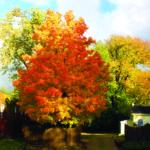 Reading Is Worship 9: Spectrum Of Glories