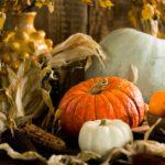 Thanksgiving Day Meditation